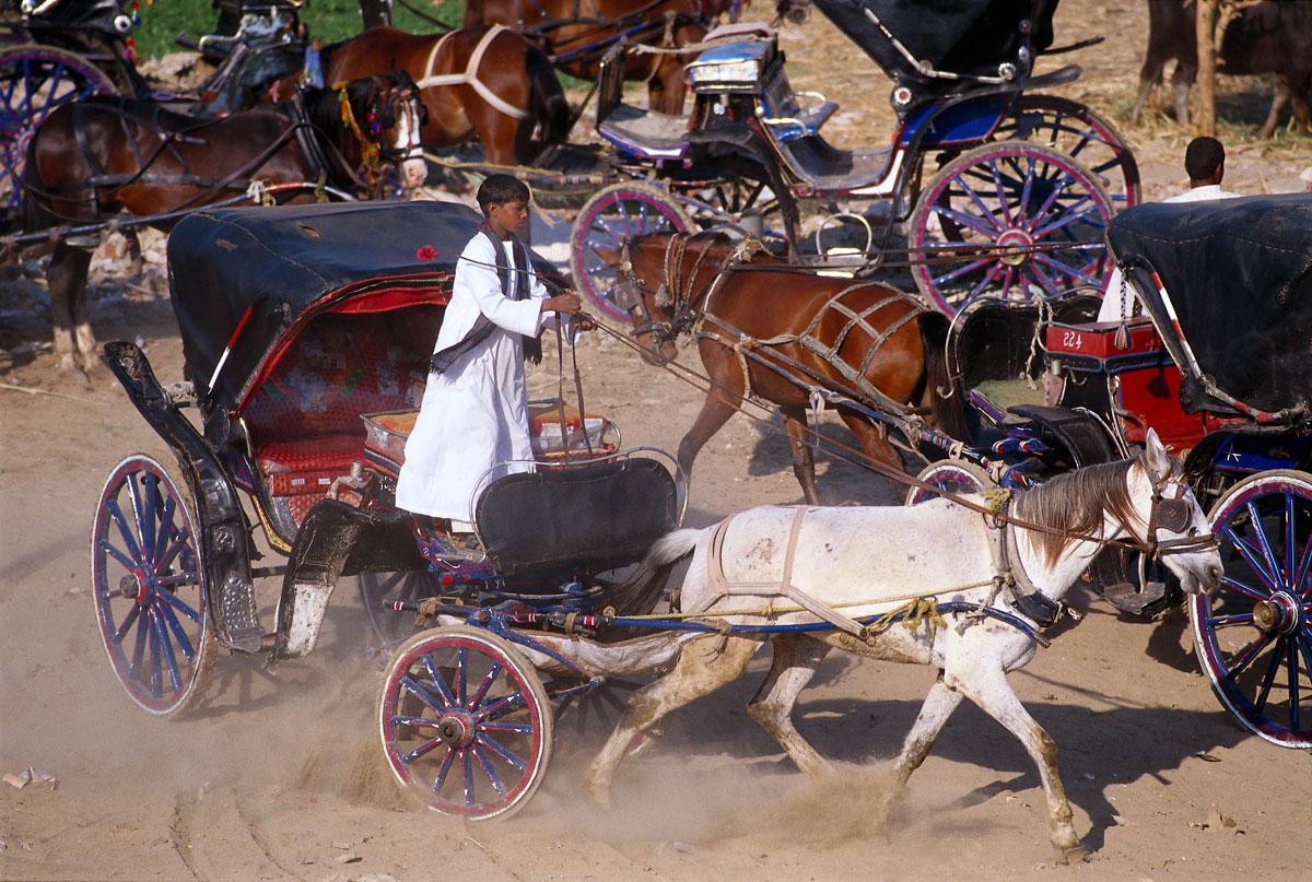 Kutschenfahrer in Edfu