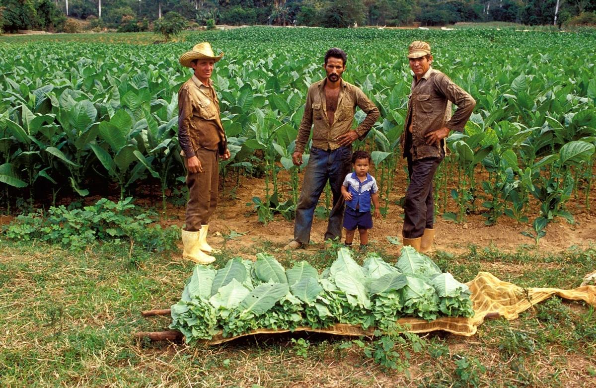 Kuba - Tabakbauern in Pinar del Rio