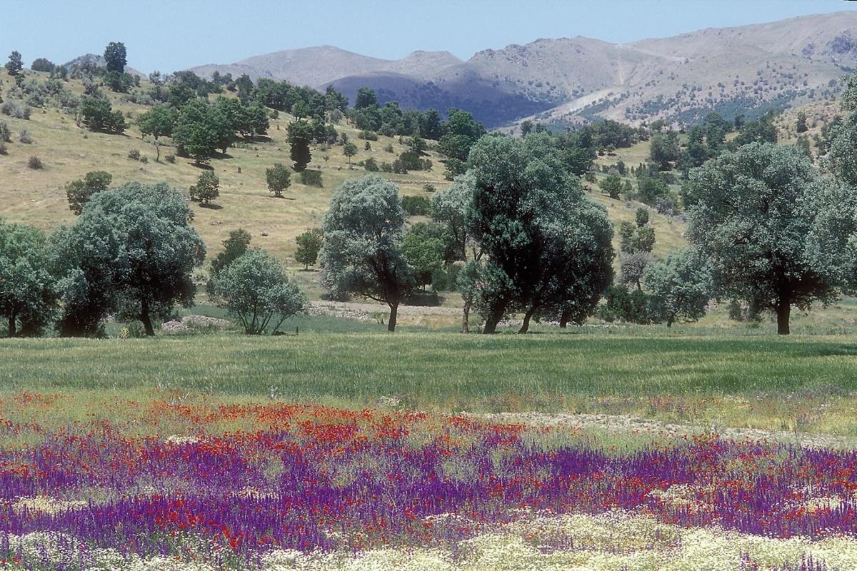 Landschaft bei Konya