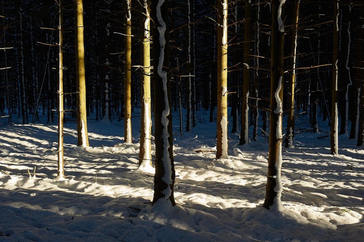 Winterwald mit Sonne